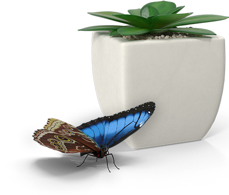 Blue butterfly + potted succulent; copyright 2016 Sheila Dent